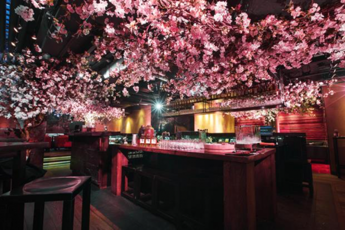 suntory cherry blossom bar